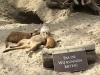 landgoed_meerkats